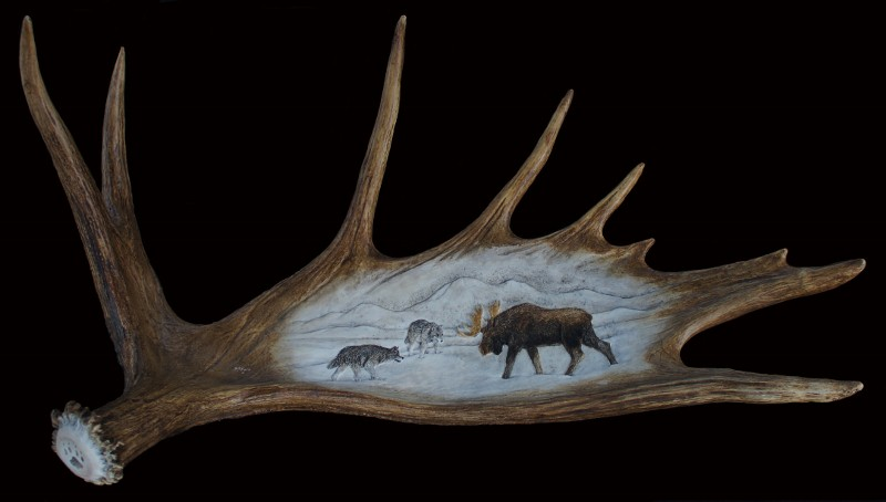 Moose and wolves antler