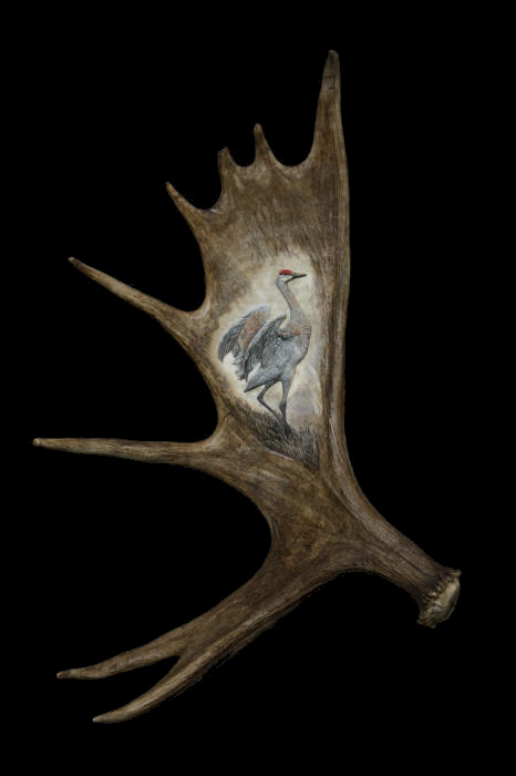 Moose Antler Carving